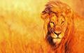Ученые обнаружили новый вид львов