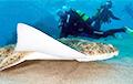 Ученые заглянули в эволюцию морских ангелов