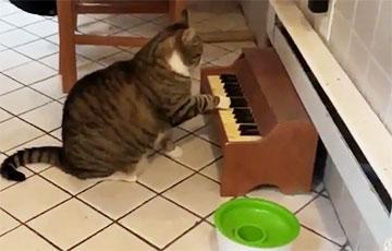 Видеохит: Кот на диете требует еды с помощью мини-пианино