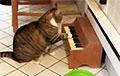 Відэахіт: Кот на дыеце патрабуе ежы з дапамогай міні-піяніна