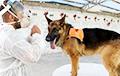 Собак научили распознавать людей с СOVID-19