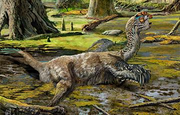 Ученые обнаружили новый вид динозавров с перьями и попугайским клювом