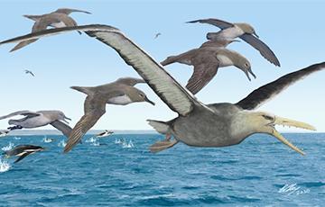Ученые рассказали о гигантских птицах, которые сменили динозавров