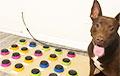 Американский логопед научила собаку «говорить»