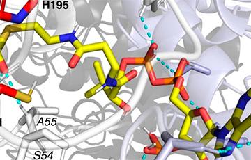 Ученые нарушили правила биохимии и открыли новую реакцию