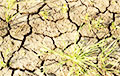 Засуха в Крыму: оккупанты признали критическое состояние озимых зерновых