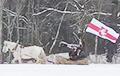 Под Полоцком заметили конную «тачанку» с бело-красно-белым флагом