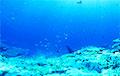 В глубинах океана ученые нашли неизвестных науке хищников
