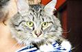 Ученые выяснили, почему у большинства домашних кошек есть белые «носочки»