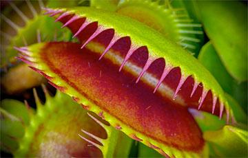 Ученые научились контролировать растение-хищник