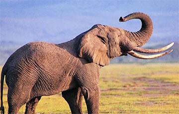 Ученые обнаружили «детские сады» древних слонов