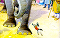 Expert On EEC Ultimatum To Cockroach: Elephant Unfolded Its Trunk And Blew On Pug
