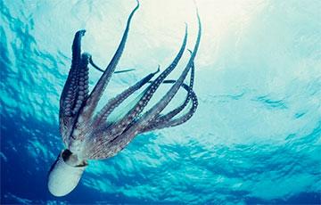 Ученые: Во сне осьминоги меняют цвет в зависимости от того, что им снится0