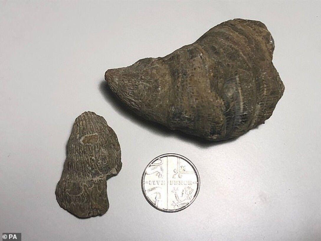 Шестилетний британец нашел в саду артефакт возрастом до 500 миллионов лет1