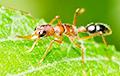 Биологи обнаружили насекомых, меняющих размеры собственного мозга
