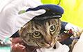 Кот в Японии спас человека и стал главой отдела полиции