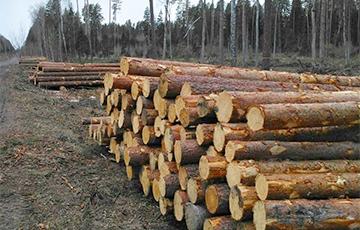 Белорусы требуют остановить массовую вырубку леса