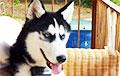 Говорит по-человечески: собака с уникальной способностью стала звездой Сети