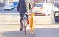 Видеохит: Собака сопровождает хозяина на самокате во время прогулки