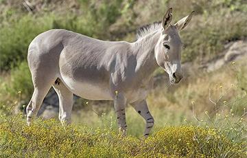 Ученые: Дикие лошади и ослы оказались способны копать колодцы до двух метров глубиной