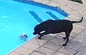 В ЮАР собака вытащила «подругу» из бассейна и стала звездой Сети