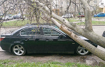 Trees Fall from Strong Wind in Minsk