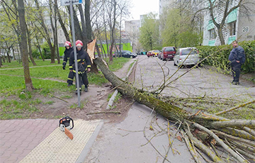 Деревья на авто, отключения электричества, сорванные крыши: что натворила стихия в Беларуси