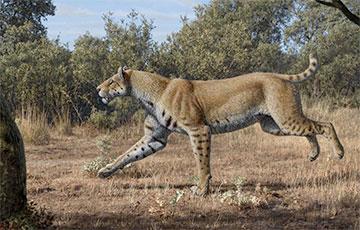 Ученые обнаружили новый вид гигантской саблезубой кошки