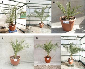 Ученые «воскресили» библейские растения возрастом две тысячи лет