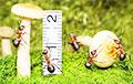Россиянам теперь придется измерять грибы перед тем, как срезать