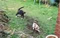 Адважны кот прымусіў уцякаць «вартавога парадку» і стаў зоркай сеціва