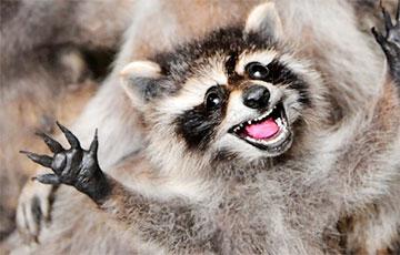 Ученые выяснили, что гораздо больше животных умеет смеяться, чем предполагалось