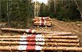 Жители Воложинского района провели акцию против массовой вырубки леса