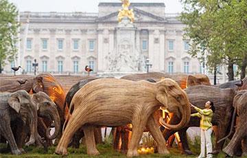 У Букингемского дворца установили 125 деревянных слонов