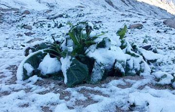 Турцию в начале лета неожиданно засыпало снегом