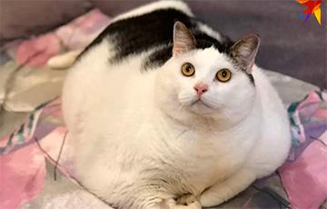 Похудел и завел Тик-Ток: как живет Перышко – самый толстый кот Беларуси0