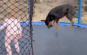 Забавно прыгающая на батуте собака стала звездой Сети