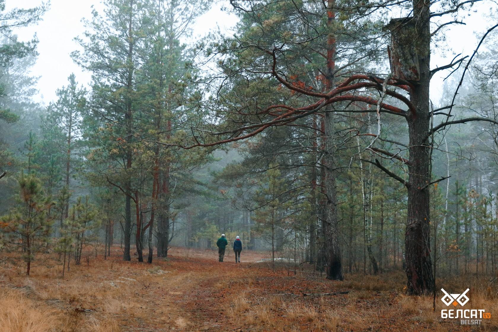 Где отдохнуть белорусам в условиях закрытых границ5