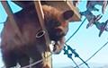 Забравшийся на столб линии электропередач медведь стал звездой Сети