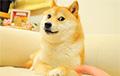 Ученые обнаружили самого близкого родственника домашних собак