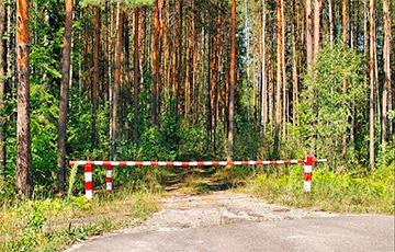 В каких районах Беларуси введены ограничения или запрет на посещение лесов