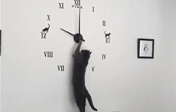 Научившаяся переводить стрелки часов кошка стала звездой Сети