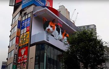 В Японии появился большой 3D-кот, который мяукает на экране торгового центра