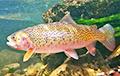 Ученые рассказали о необычном секрете мозга рыб