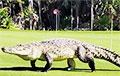 Пятиметровый крокодил пришел сыграть в гольф и стал звездой Сети