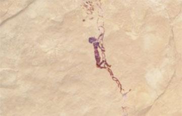 В Испании найден древний рисунок, которому 7500 лет