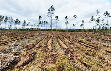 Shocking Scale Of Deforestation In Belarus Showed In One Video