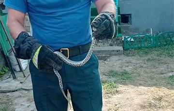 В Минском районе сельчане не смогли попасть в дом из-за змеи