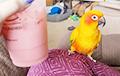 Видеохит: Попугай танцует под необычный аккомпанемент