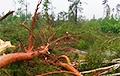 Па Расонскім і Полацкім раёнах прайшоў ураган